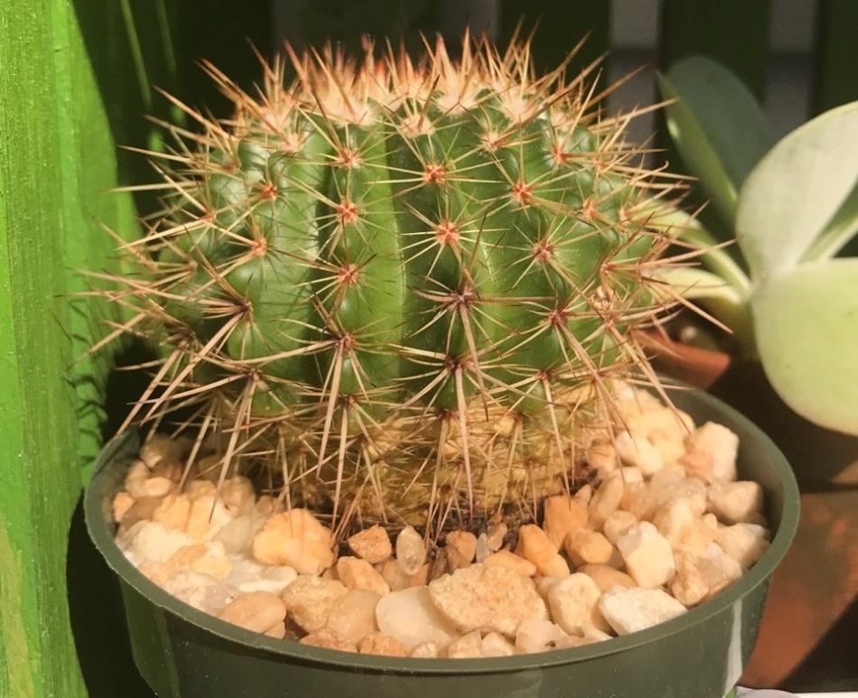 20190212B los-plantalones.tumblr.com.jpg