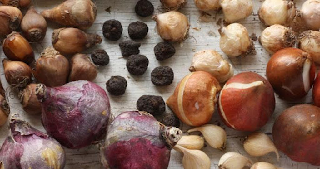Wide range of dry flower bulbs showing different shapes, sizes, colors and textures.