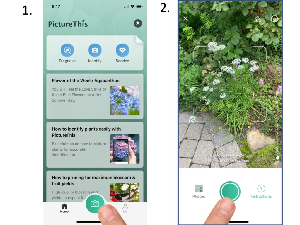 How to turn on camera in PictureThis app and how to take a picture in PictureThis app.