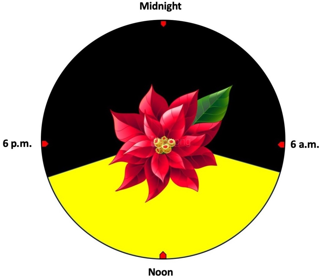 Circle with poinsettia in the center. The top two thirds is black (night), the bottom third is yellow (day).