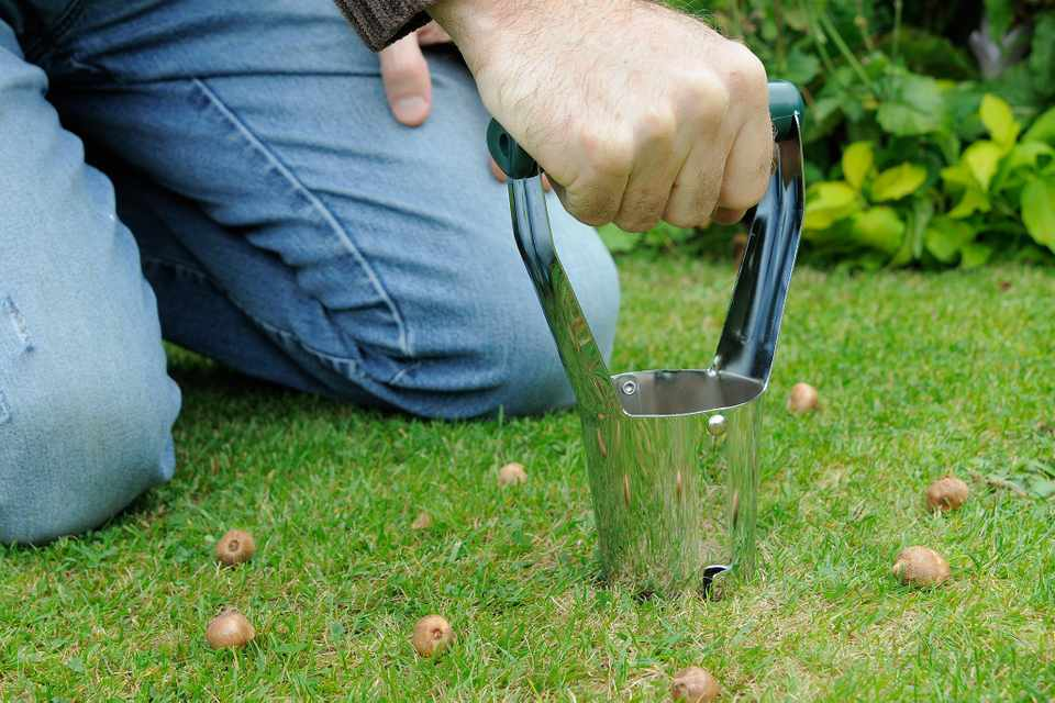 Bulb planter cutting hole into lawn. Bulbs on grass all around.