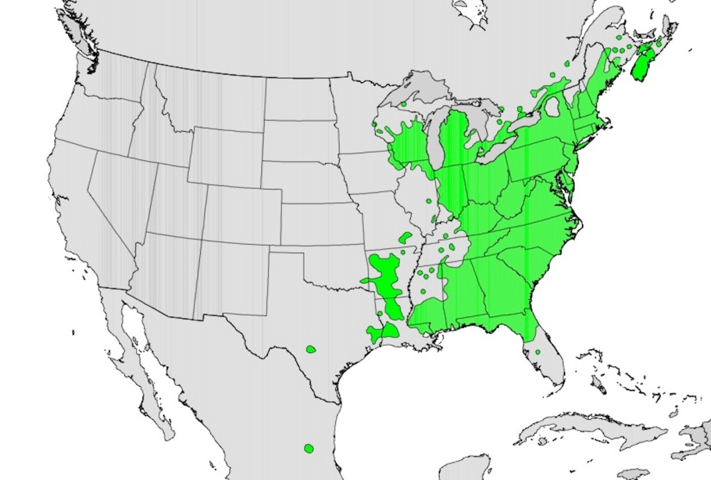 Natural distribution map of American witch-hazel