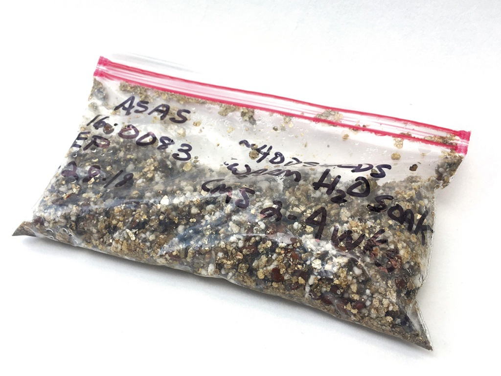 Seeds stored in a bag of damp vermiculite