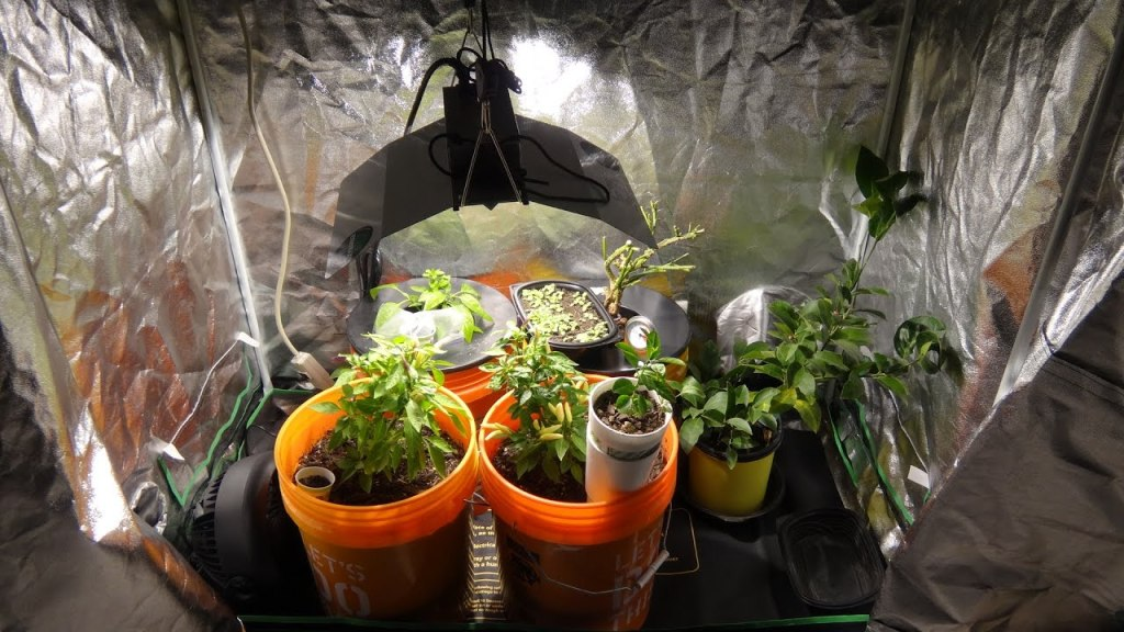 Grow op installation with mylar paneling and grow light, buckets with vegetables growing.