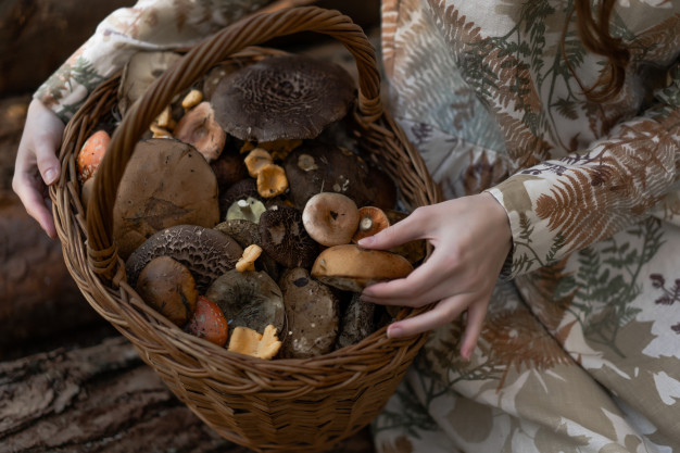 Variety of mushrooms in a basket.
