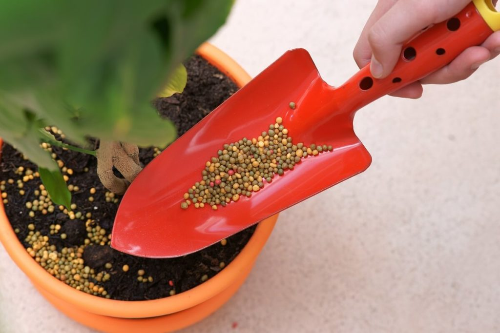 Fertilizer pouring into plant pot.