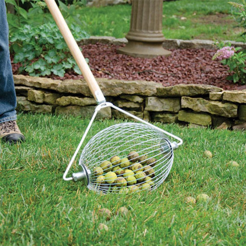 Nut gatherer with green walnuts inside