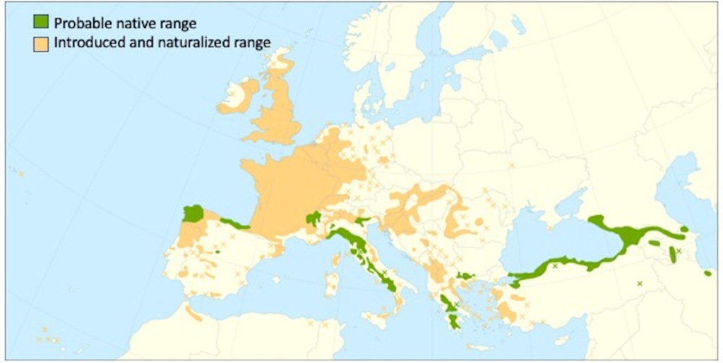 Map showing the native range and introduced range of the sweet chestnut.