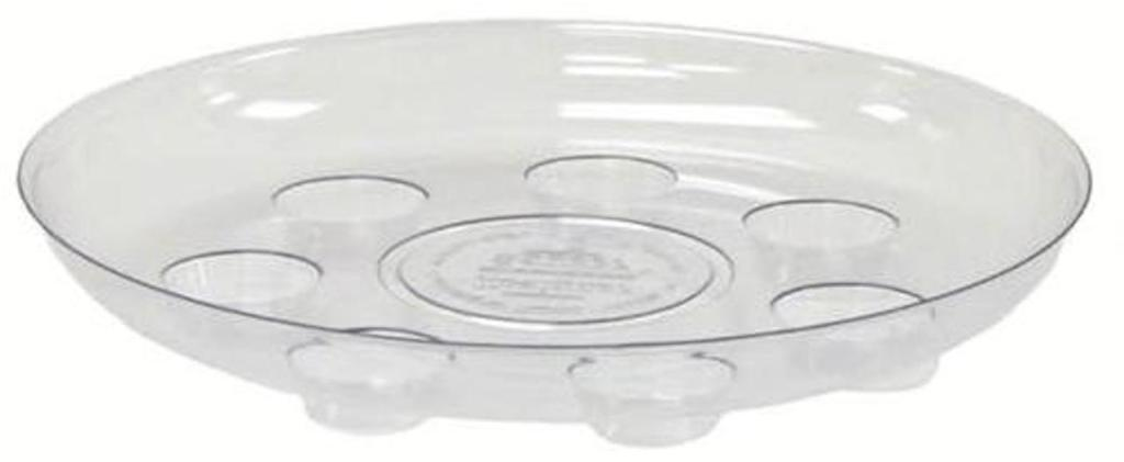 transparent saucer with deep depressions to collect water