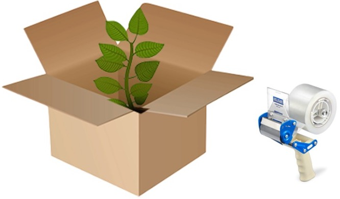 Plant in a cardboard box with a tape dispenser.