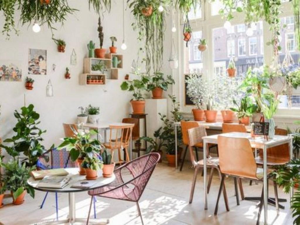 Room with houseplants.