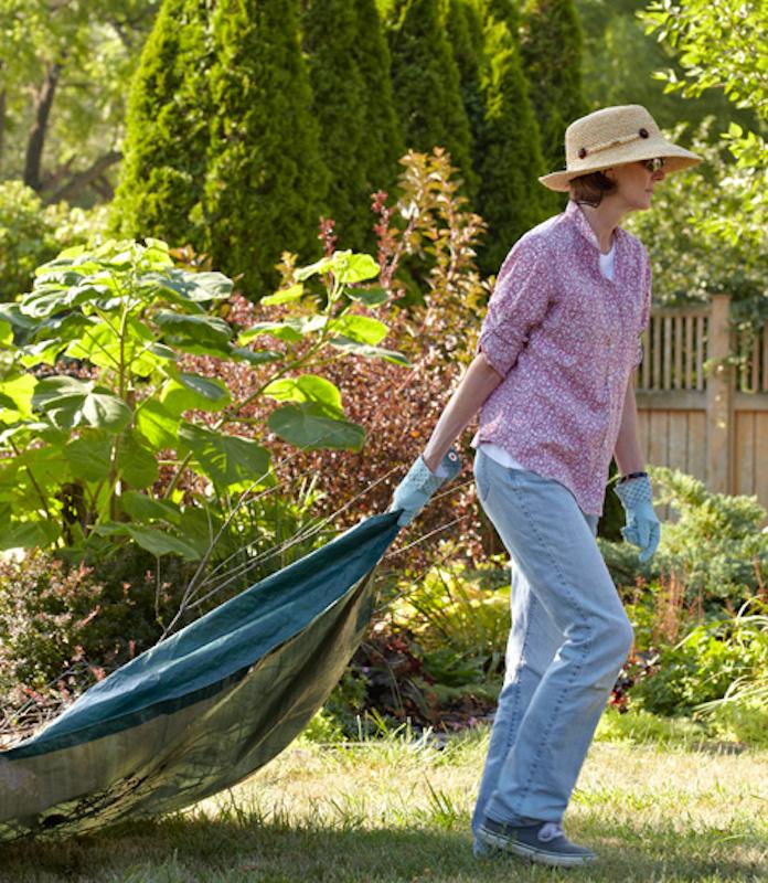 Woman dragging shrub on tarp