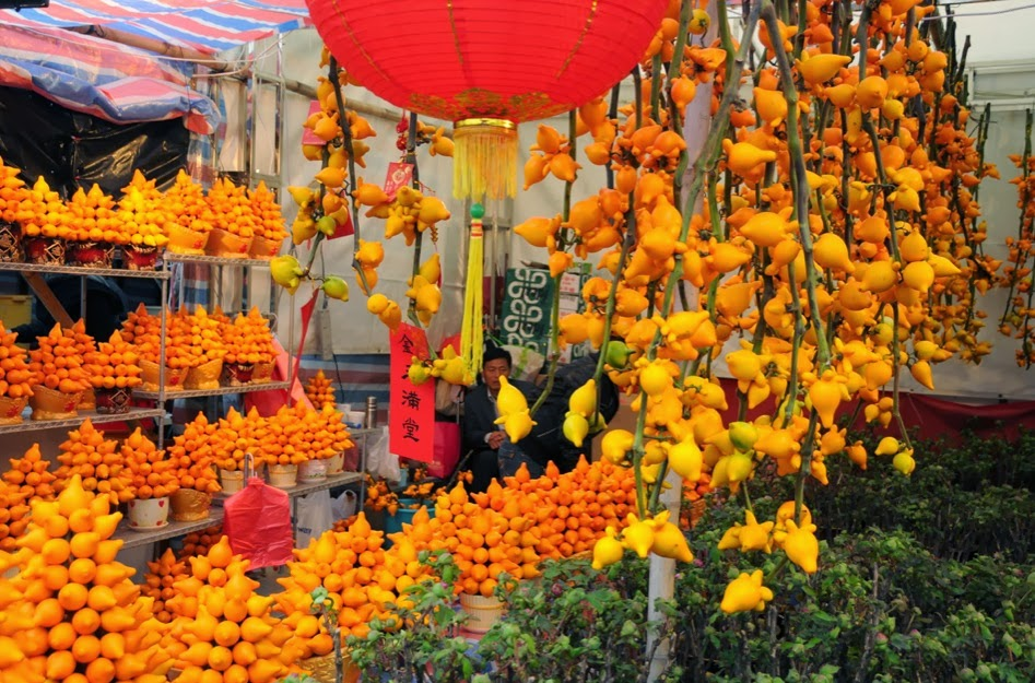 New Year's display of bright orange fruits of Nipple fruit  in Hong Kong market.