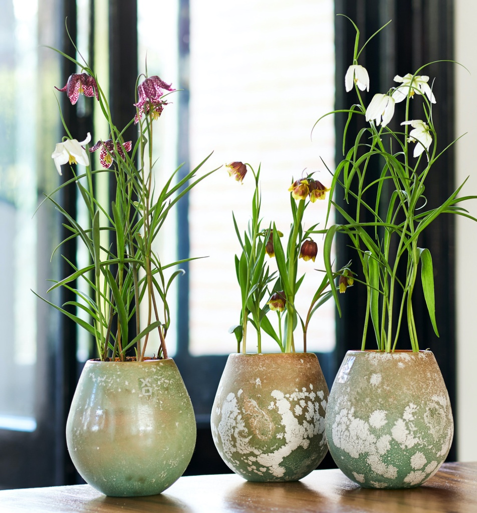 Three different fritillaries in ornamental pots on a table.