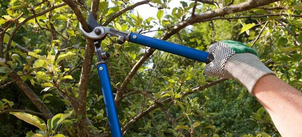 Suppression d'une branche d'arbre.