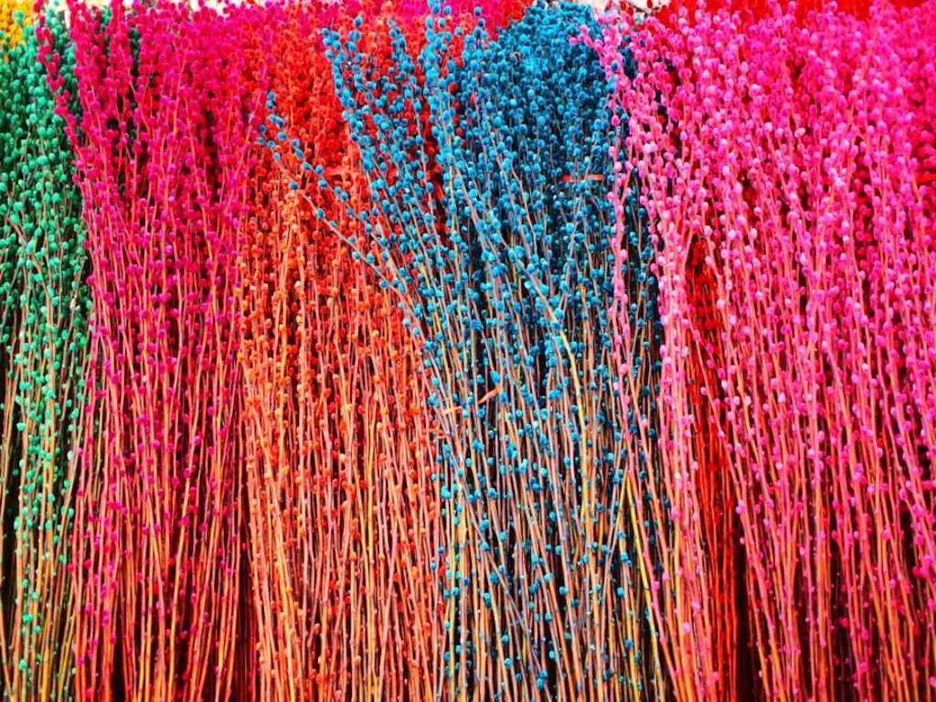 Pussy willow branches died in bright colors.