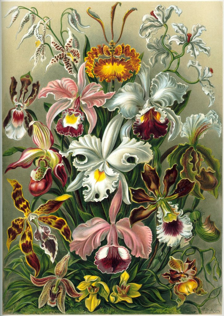 Illustration of multiple different orchids.