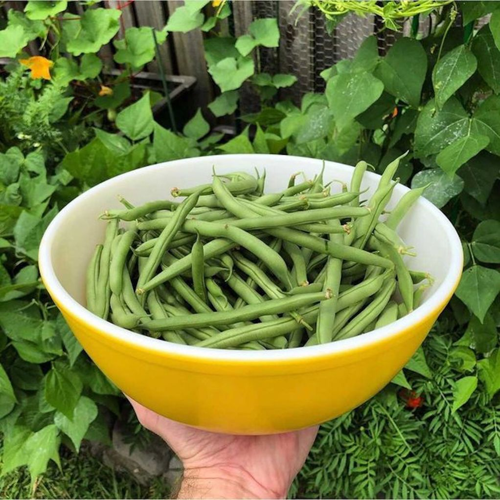 Hand holding yellow bowl of green beans.