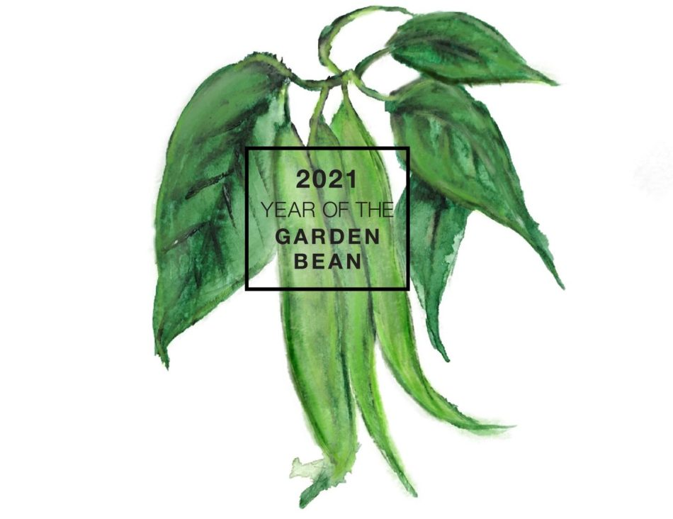 Illustration of green beans and leaves, with 2021 year of the garden bean overprint