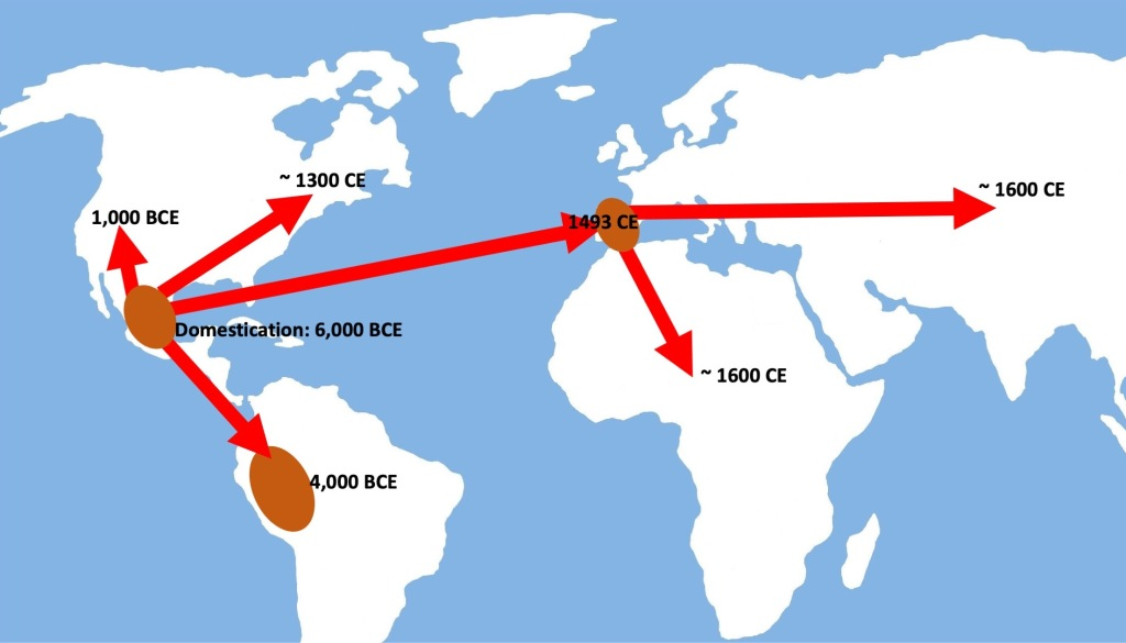 Map showing how beans traveled around the world.
