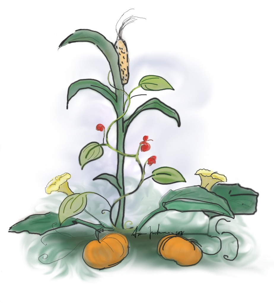 Illustration showing three sisters culture: beans, corn, squash.