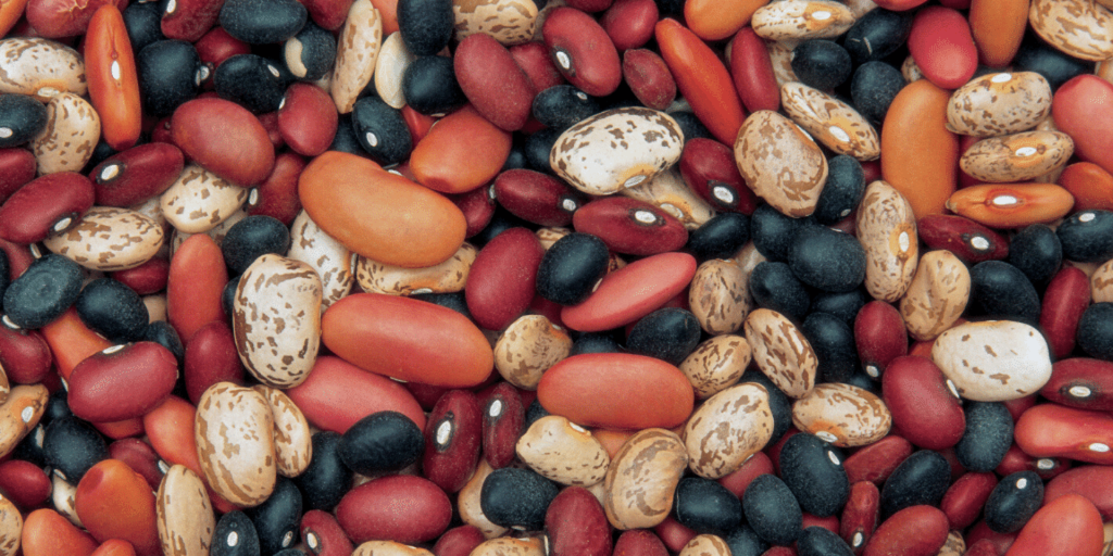 All different colors of dried beans.