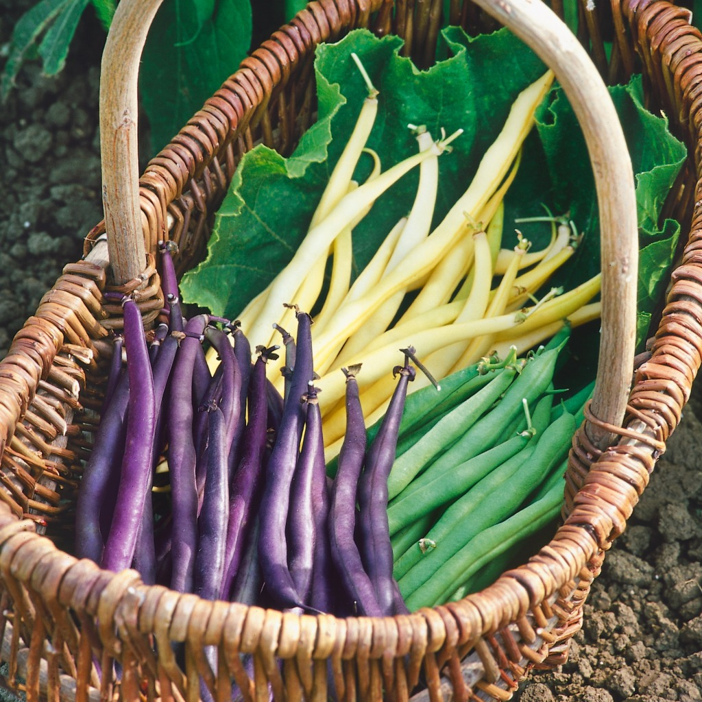 yellow, green and purple beans in a basket.