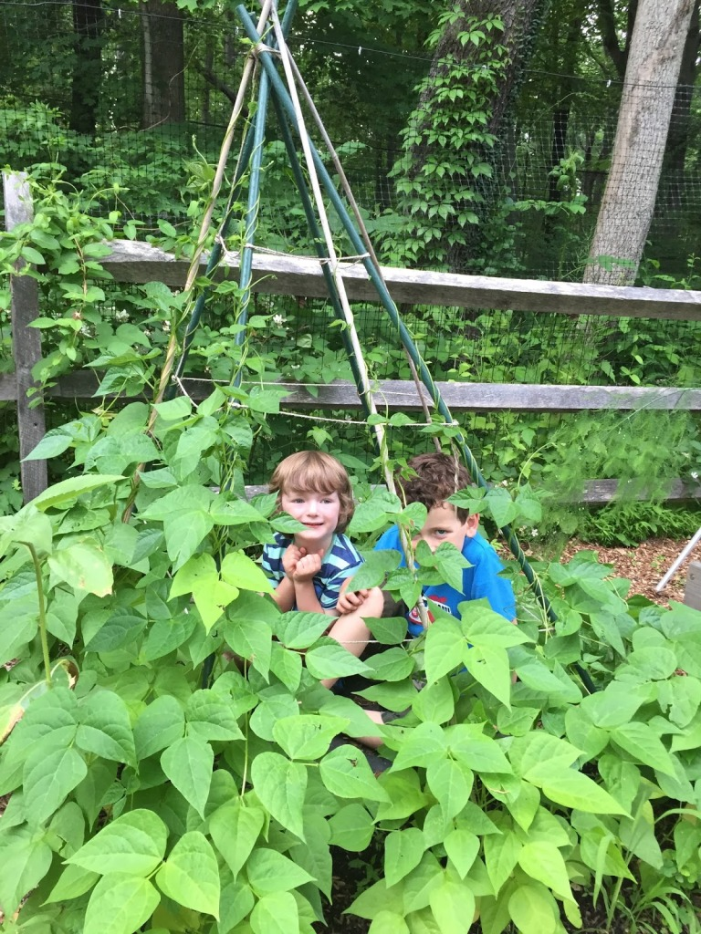 Teepee of beans with two children playing inside.