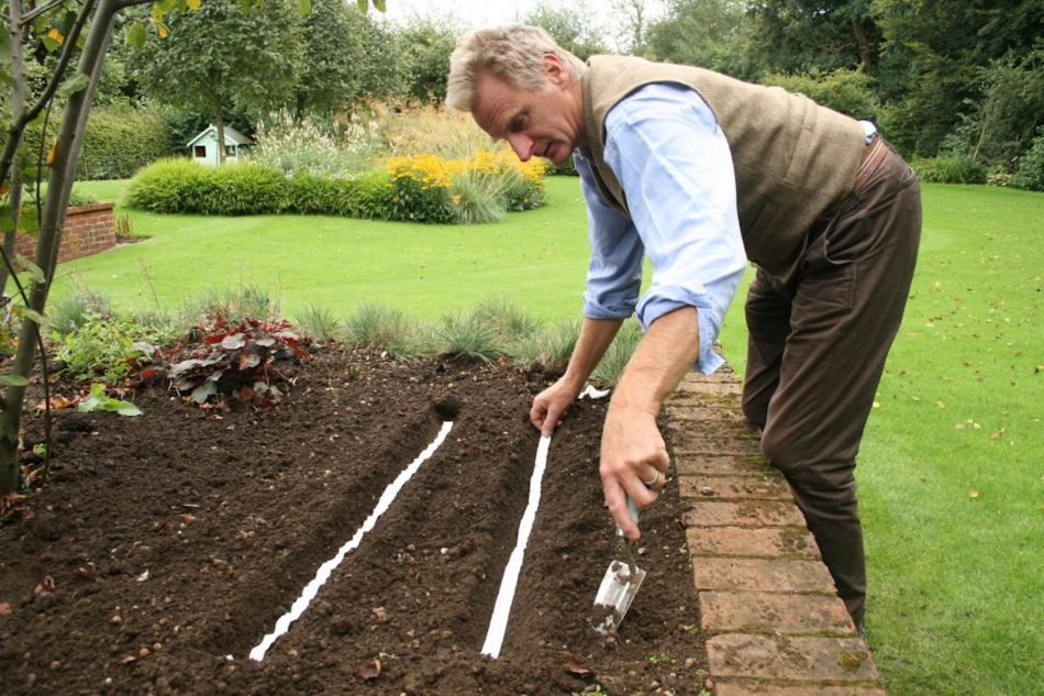Man applying seed tape in a raised vegetable bed.