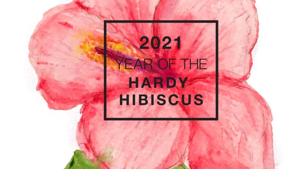 Reddish pink water color of hibiscus flower marked 2021 Year of the Hardy Hibiscus