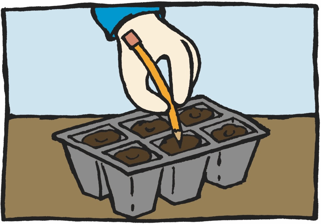 Illustration showing a hand a pushing pencil into the soil of a 6 pack.