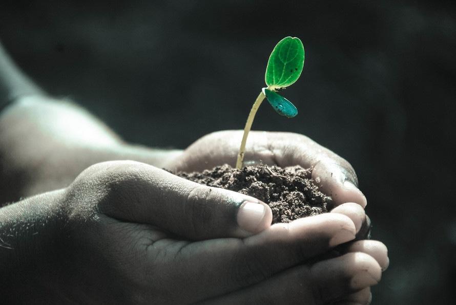 Hand holding seedling.