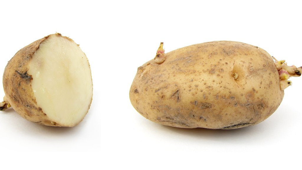 Potatoes with sprouts, one cut in half.