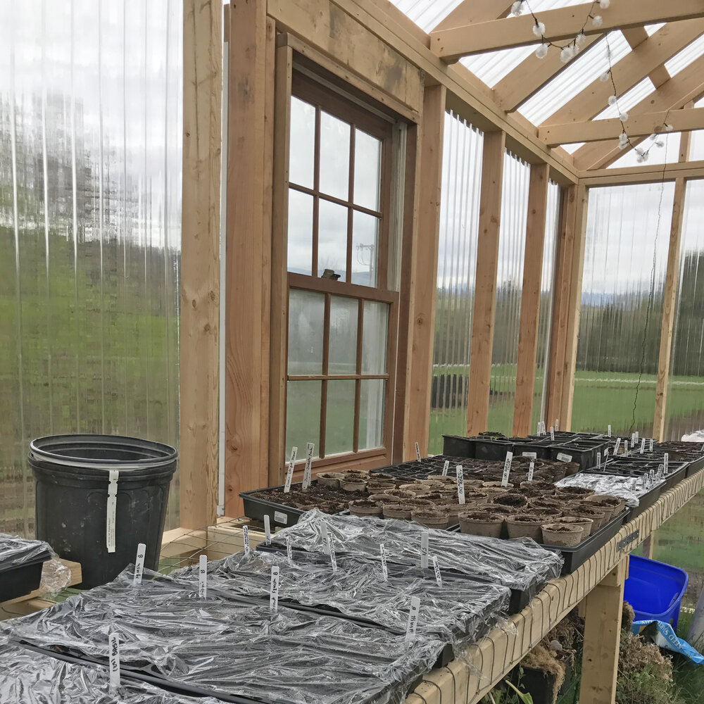 Home greenhouse with seedlings started.