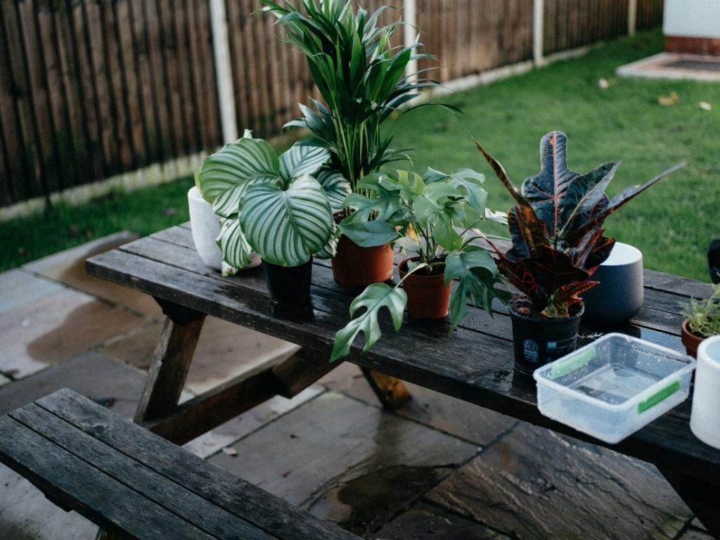 Houseplants on a picnic table.