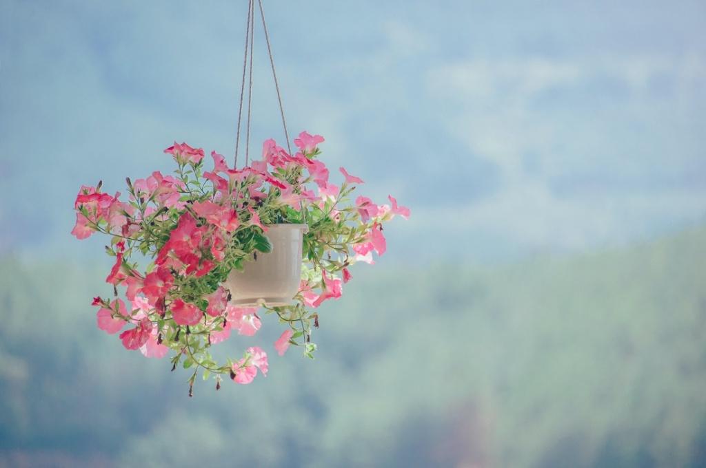 Hanging basket of petunias.