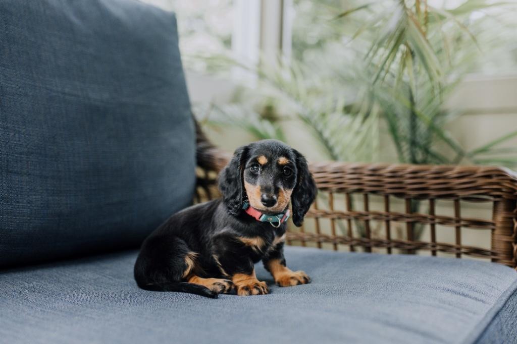 Puppy on cushion seat in garden.