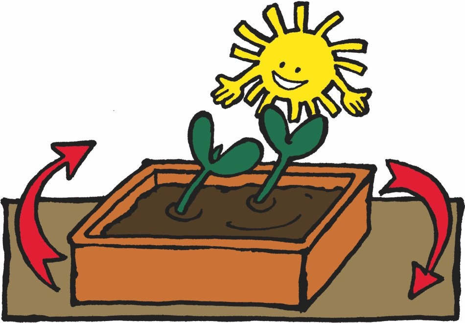 Illustration showing how to give a quarter turn to the seedlings.