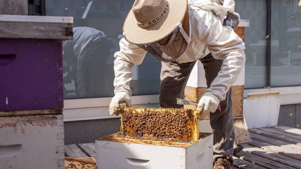 Beekeeper on a rooftop beehive.