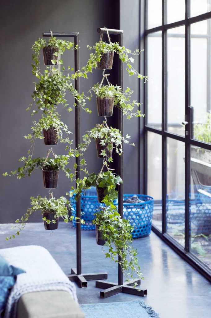 Hanging baskets of ivy on two supports in front of a large window.