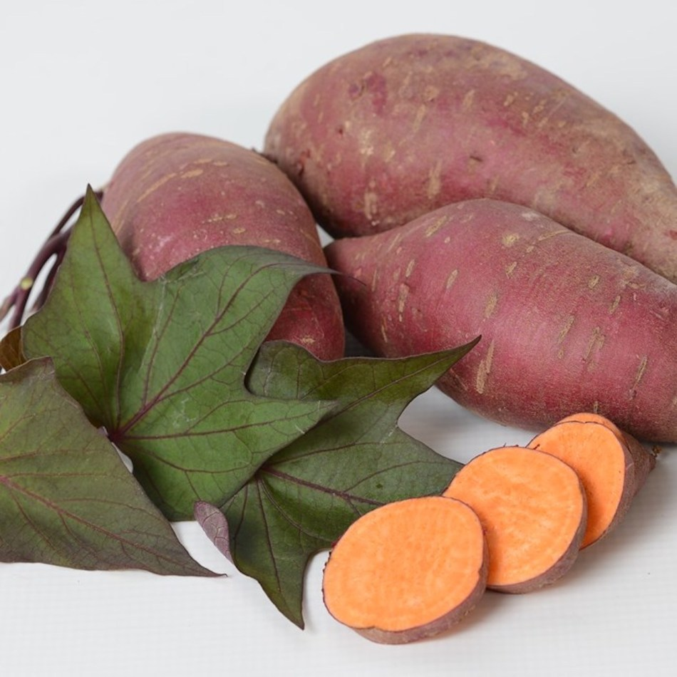 Patate douce Tatakota montrant des feuilles lobées violet verdâtre et un tubercule à peau violette et à chair orange