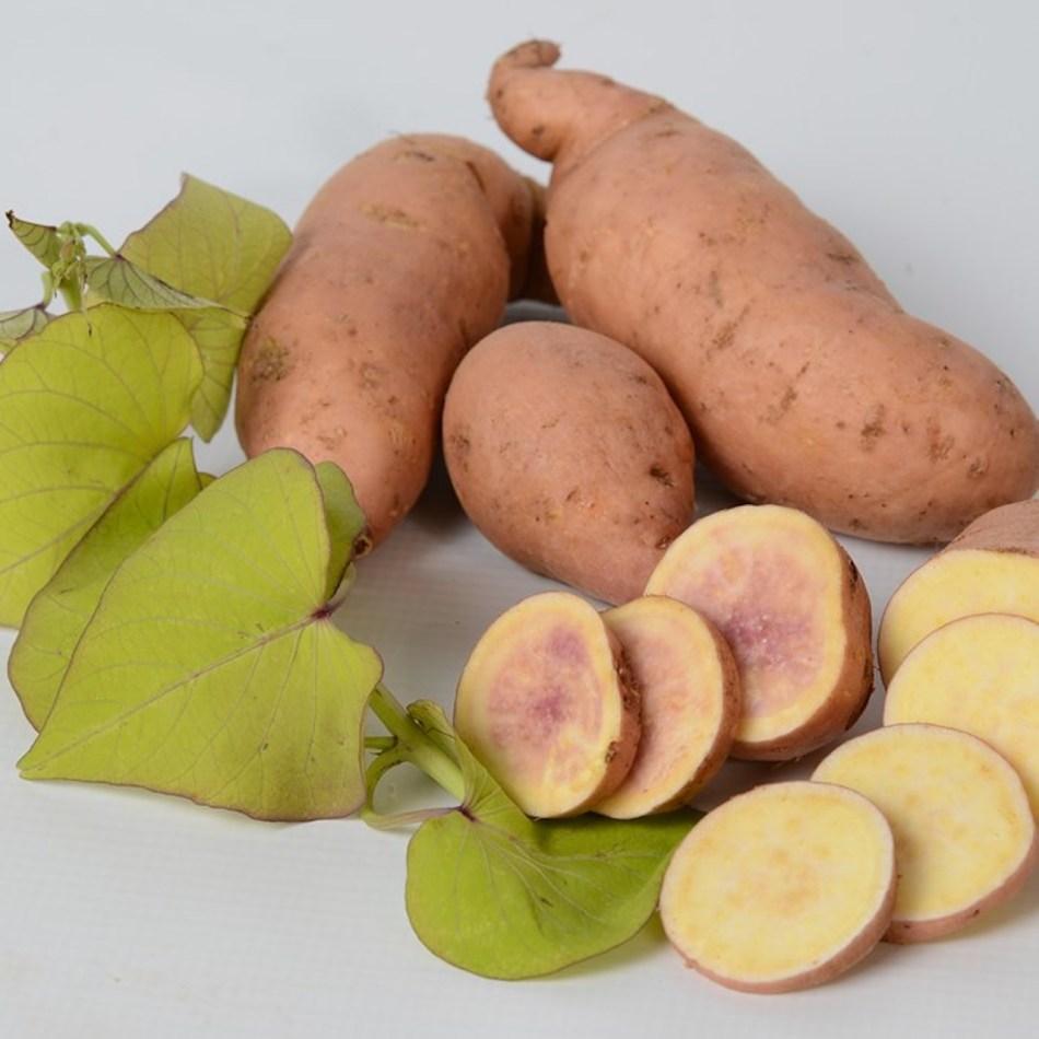 Patate douce Makatea montrant des feuilles chartreuse en forme de cœur et un tubercule à peau orange et à chair blanche.