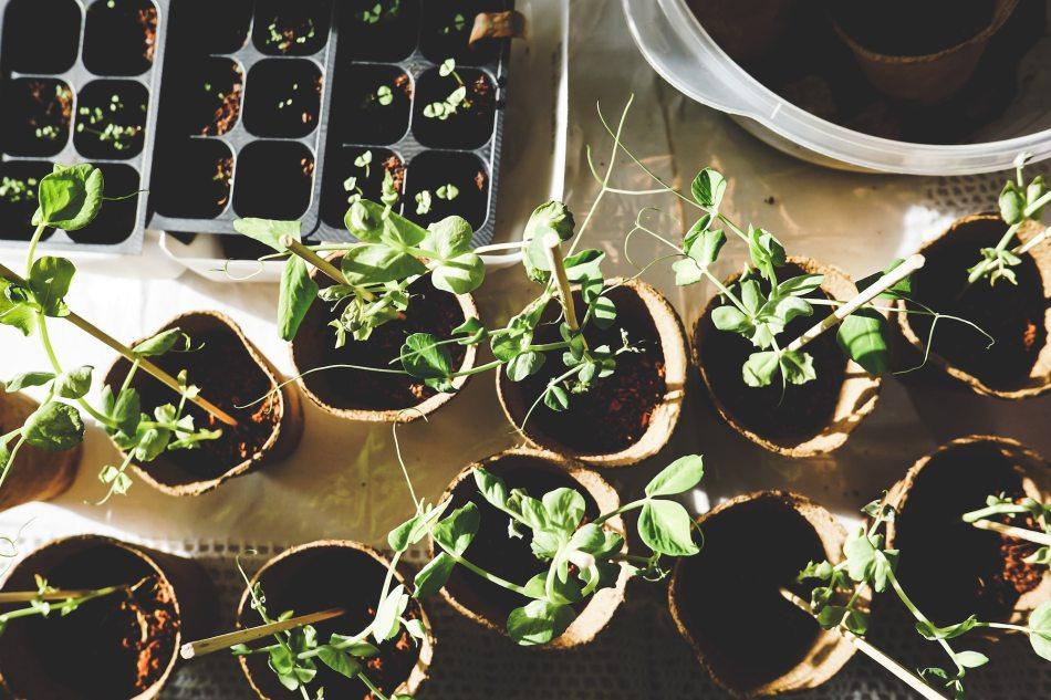 Pots de semis