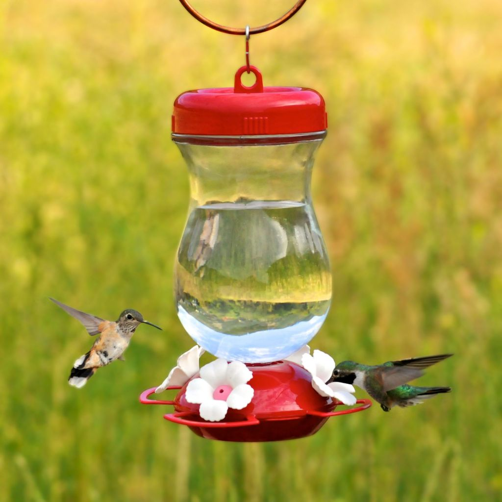 Male and female ruby-throated hummingbirds on a feeder.