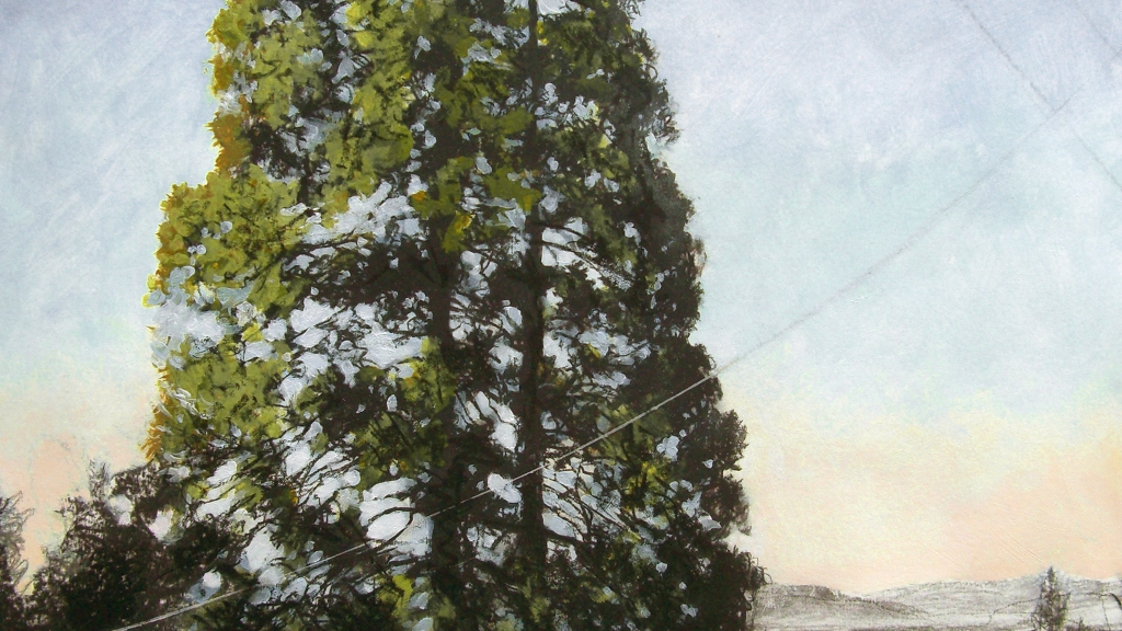 Painting of giant sequoia.