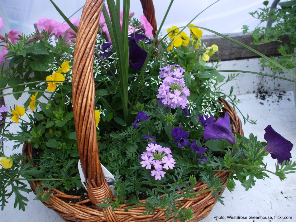 Wicker basket filled with annual flowers.