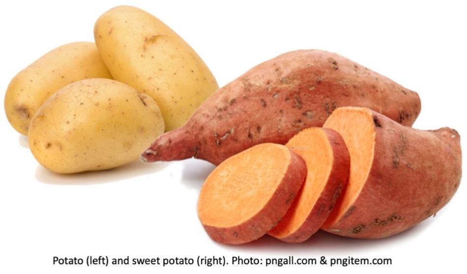 Potato tuber versus sweet potato tuber