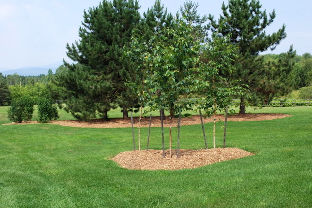 RCW mulch used in landscaping.
