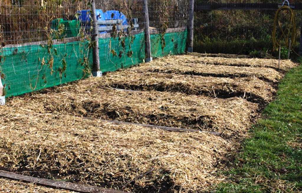 RCW used as mulch in a vegetable garden