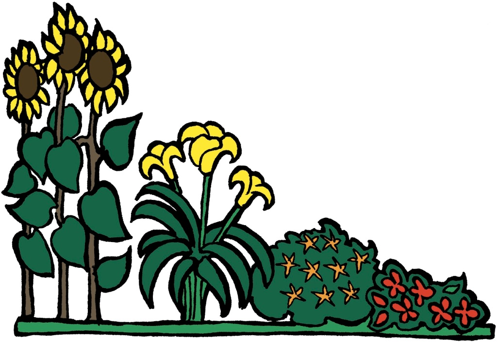 Illustration showing plants placed in order of height.